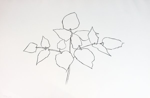 Woodland Plant by Ellsworth Kelly