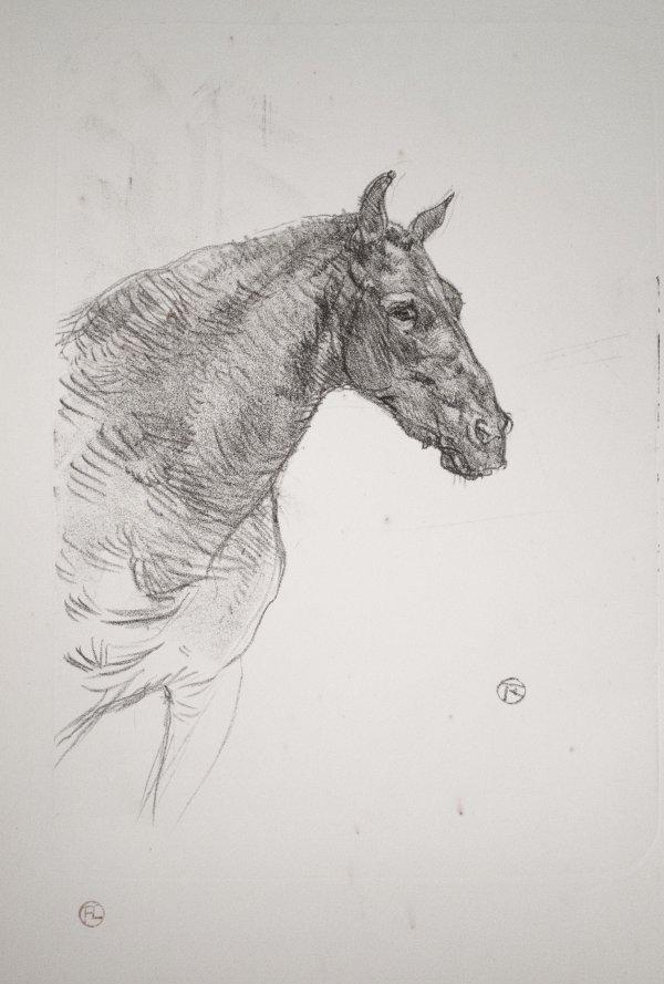 Le Poney Philibert by Henri de Toulouse-Lautrec