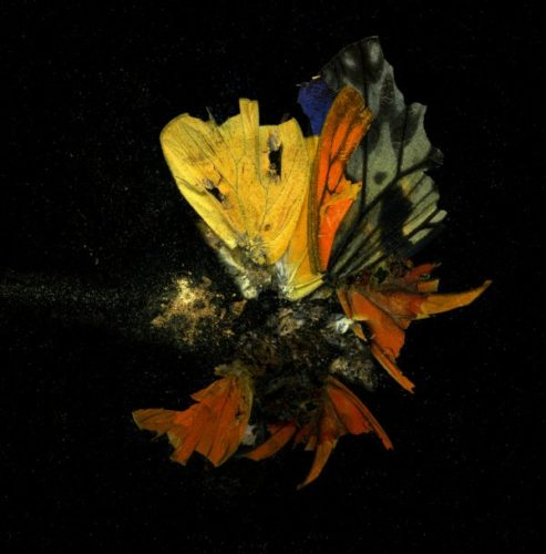 Insecticide 13 by Mat Collishaw at Mat Collishaw