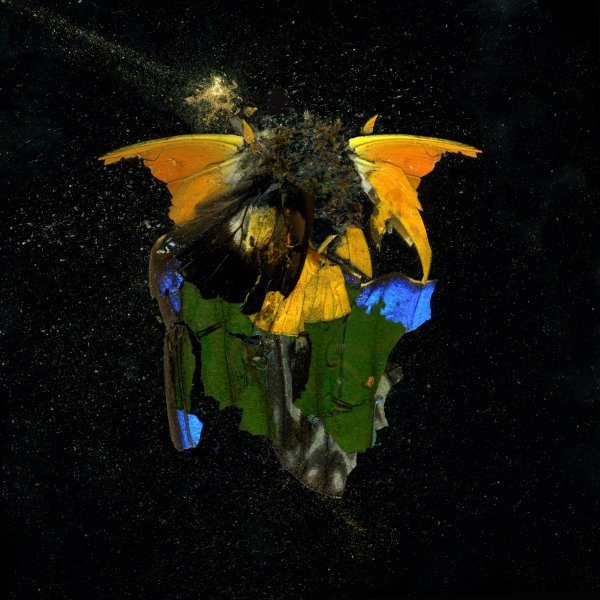 Insecticide 14 by Mat Collishaw