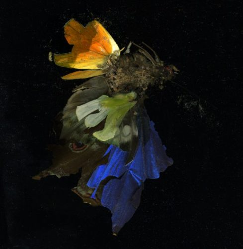 Insecticide 15 by Mat Collishaw at Mat Collishaw
