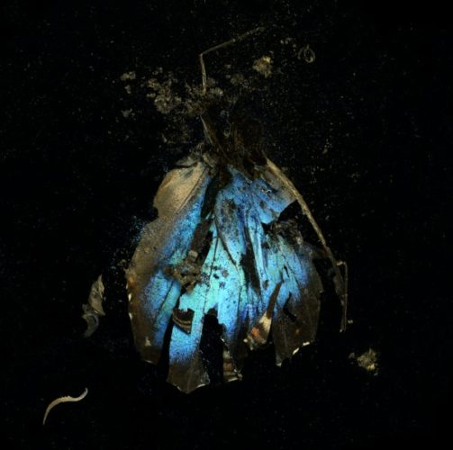 Insecticide 16 by Mat Collishaw