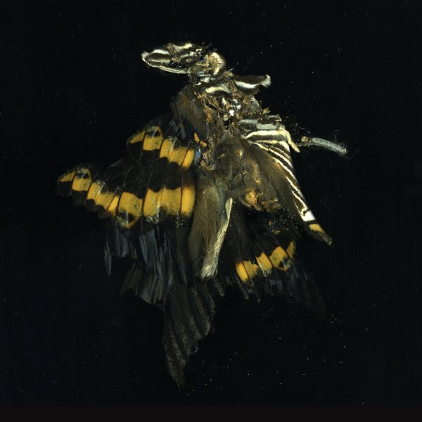 Insecticide 17 by Mat Collishaw