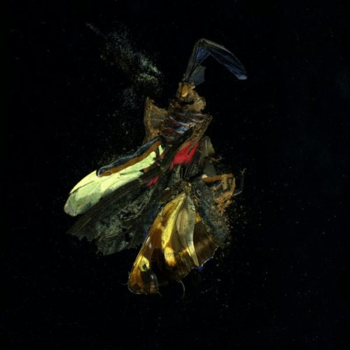 Insecticide 18 by Mat Collishaw at