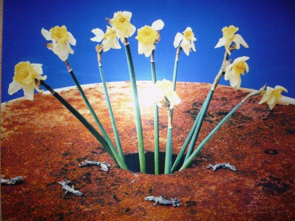 Flowers (shikikei) by Nobuyoshi Araki
