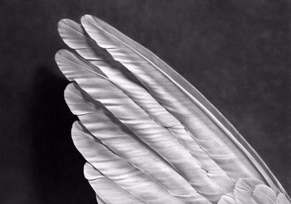Angel`s Wing by Robert Longo