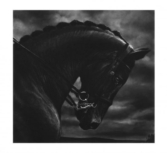 Untitled (bucephalus) by Robert Longo