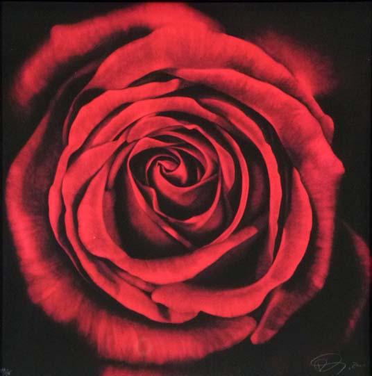 Untitled (rose) by Robert Longo