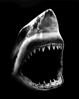 Untitled (shark 5) by Robert Longo at