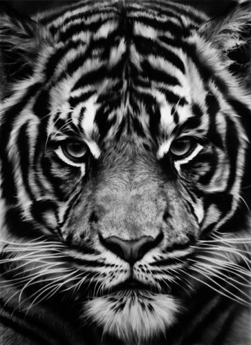 Untitled (tiger) by Robert Longo at