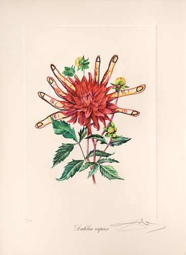 Dahlia Rapax. (dahlias Of Dalí.) by Salvador Dali