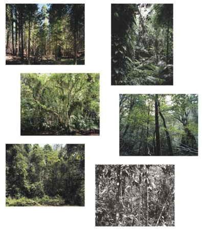 Paradise – Portfolio Of Six Works by Thomas Struth