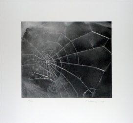 Spider-web by Vija Celmins at Kenneth A. Friedman & Co.