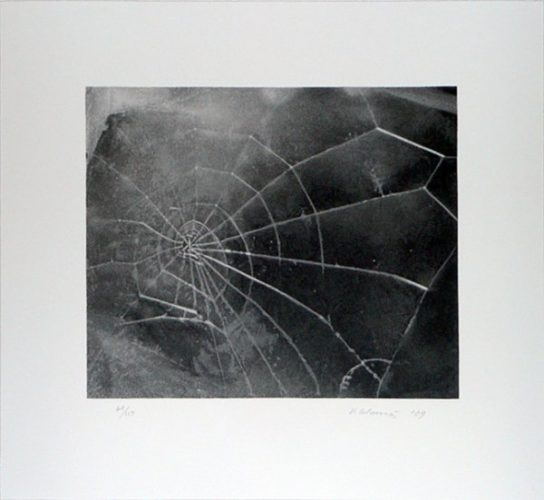 Spider-web by Vija Celmins at Kenneth A. Friedman & Co.