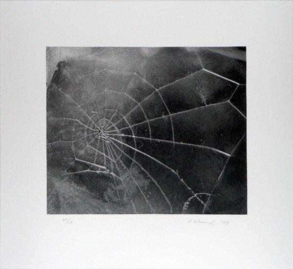Spider-web by Vija Celmins
