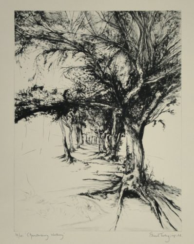 Chanctonbury Walkway by Edward Twohig