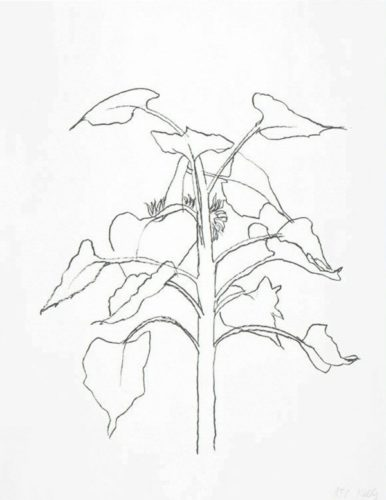 Sunflower I by Ellsworth Kelly at Lyndsey Ingram