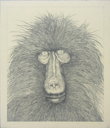 Untitled (baboon) by George Whitman