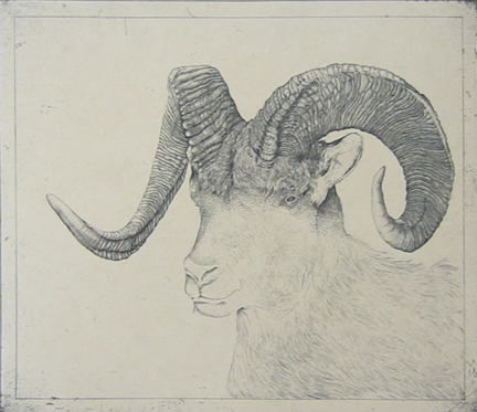 Untitled (ram) by George Whitman at