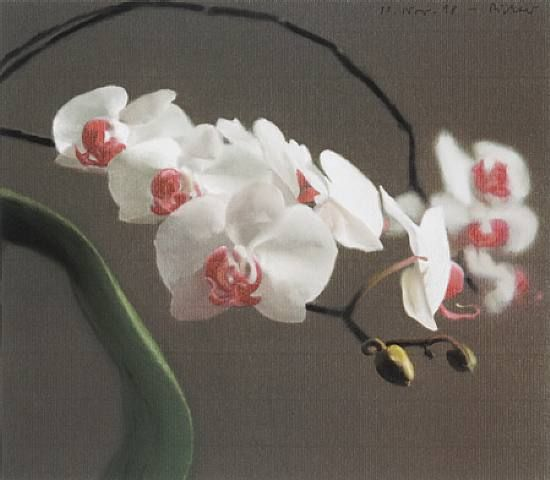 Orchid Iv by Gerhard Richter at