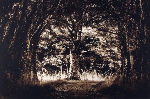 Untitled 1 by Gloria Pereyra at