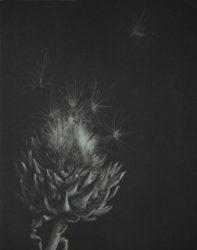 Artichoke by Judith Rothchild at Emanuel von Baeyer - Cabinet (IFPDA)