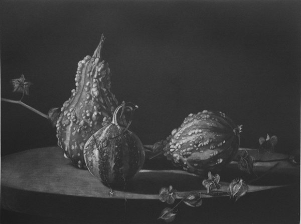 Coloquintes Et Physalis by Judith Rothchild