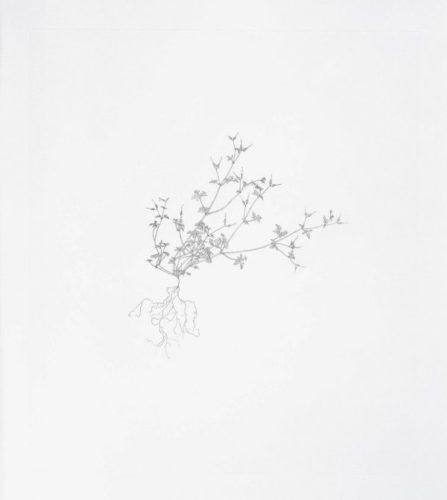 Herb-robert by Michael Landy