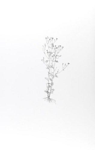 Nipplewort by Michael Landy