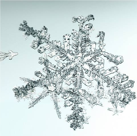 Untitled (snowflake) by Mike & Doug Starn