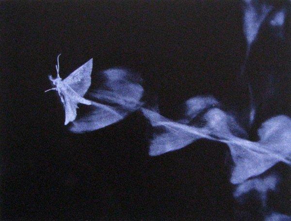 Crosswind by Paul Mutimear