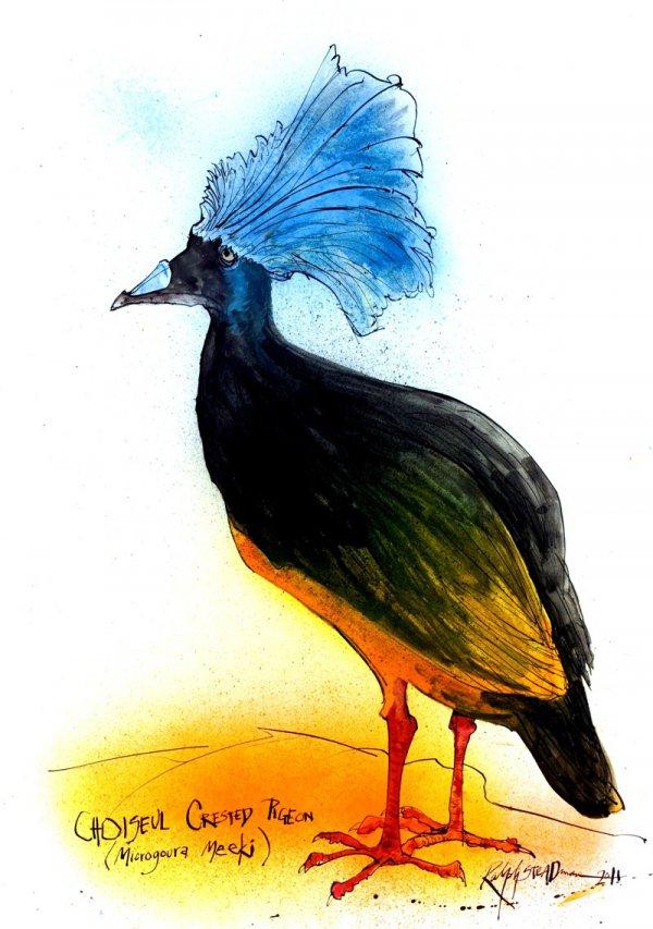 Choiseul Crested Pigeon by Ralph Steadman