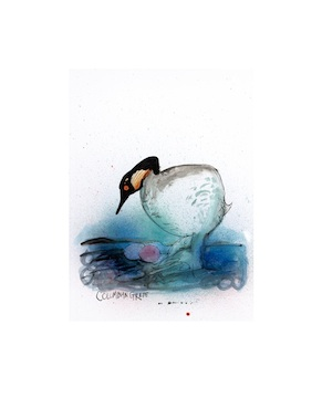 Columbian Grebe by Ralph Steadman