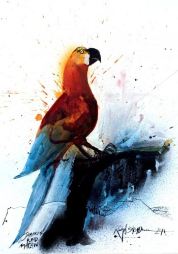 Jamaican Red Macaw by Ralph Steadman