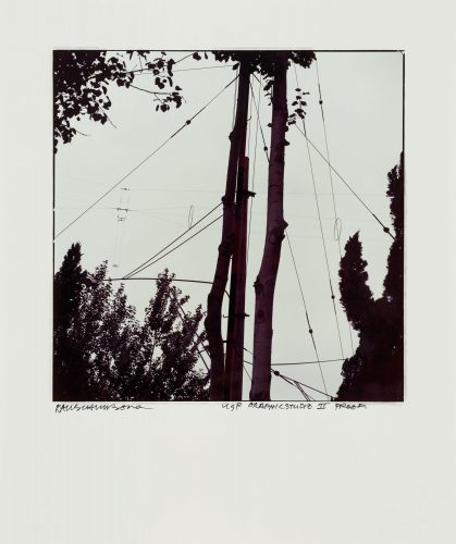 Wires And Trees by Robert Rauschenberg