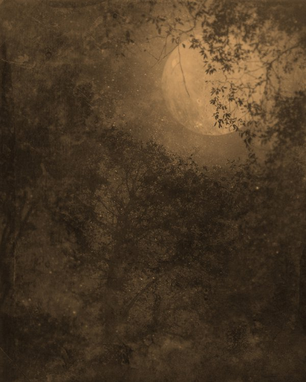 Nocturnal Landscape 1119 by Ted Kincaid