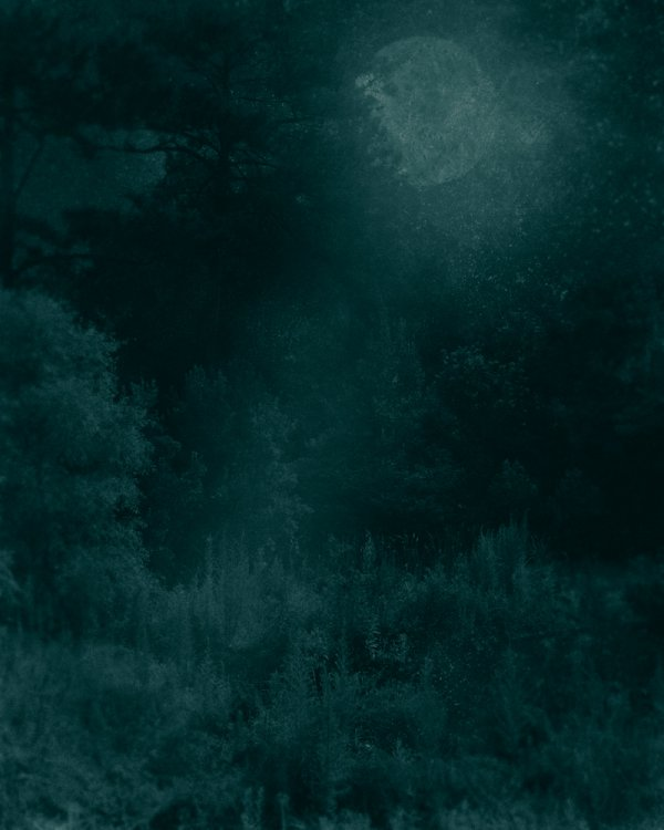 Nocturnal Landscape 228 by Ted Kincaid
