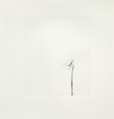 Snowdrop by William McKeown