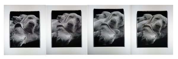 Chain (suite Of Four Panels) by William Wegman at