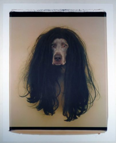 Cher (dog In Wig) by William Wegman at