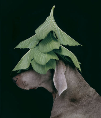 Evergreen by William Wegman at