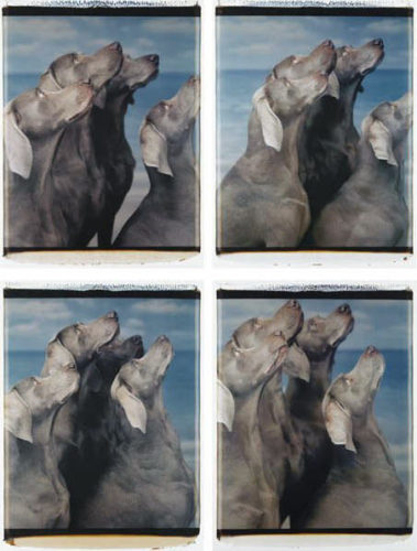 Flock (suite Of Four Panels) by William Wegman at
