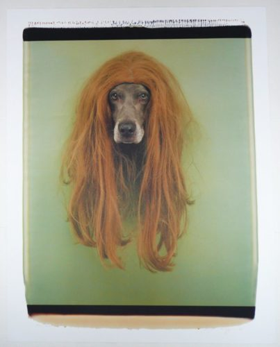 Pat (dog In Wig) by William Wegman at