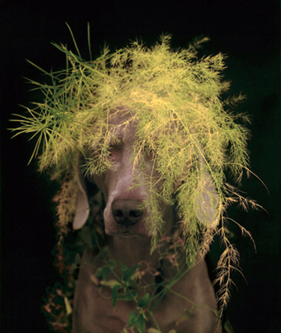 Rousseau by William Wegman at