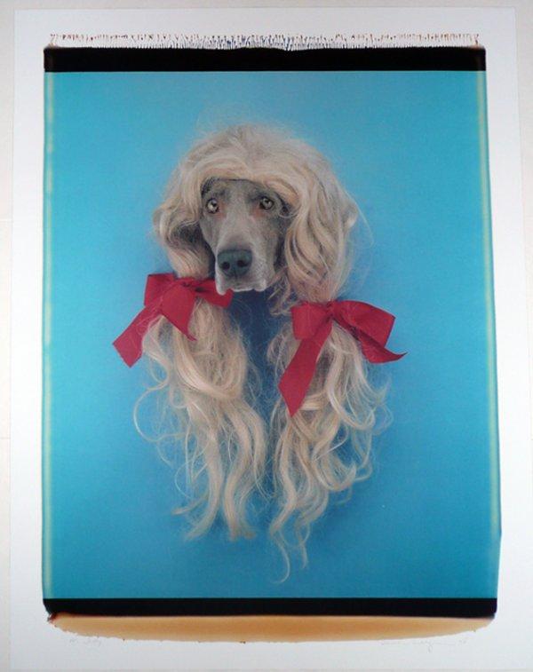 Sally (dog In Wig) by William Wegman
