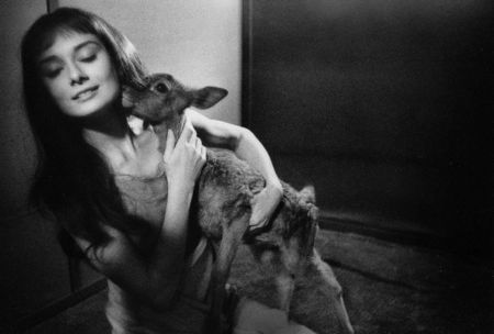 Audrey Hepburn And Deer by Bob Willoughby at