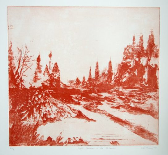 Light Shadows In The Botanics by Calum McClure