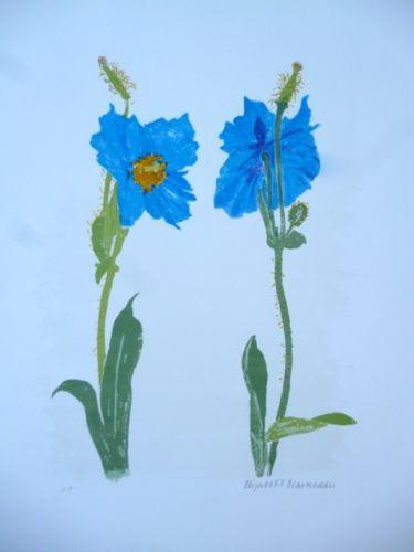 Meconopsis by Elizabeth Blackadder at