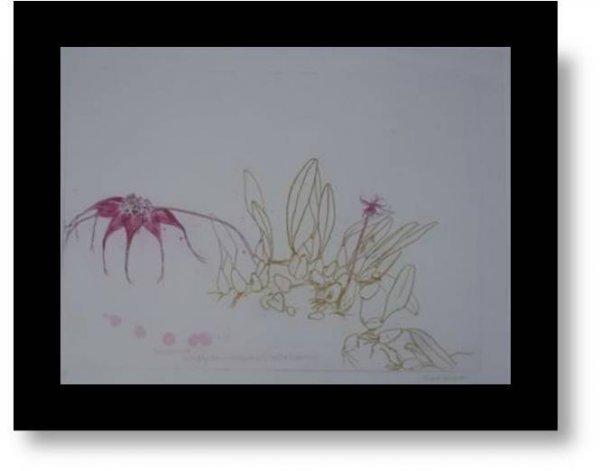 Orchidaceae-bulbophyllum Rothschildianum by Elizabeth Blackadder
