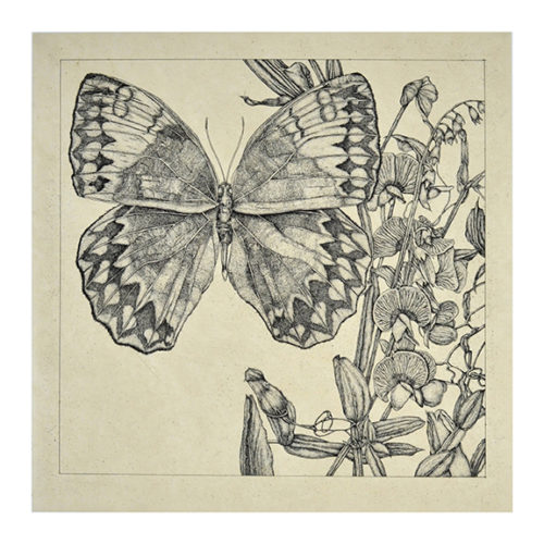 Untitled (butterfly 2) by George Whitman
